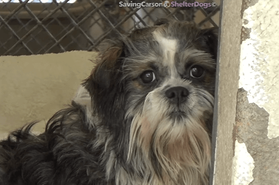 Owner complained about dog's negative behavior before leaving him at shelter
