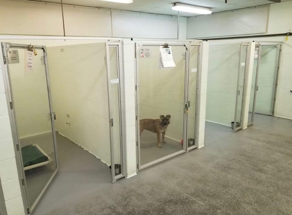 Last dog at Tacoma shelter and it's heartbreaking