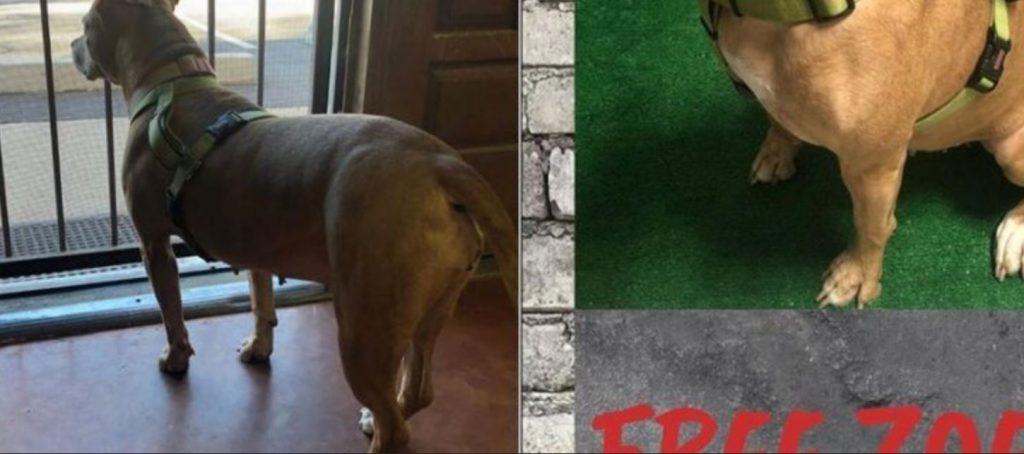 Over 377 days – shelter pleads for home for one of only remaining dogs at facility