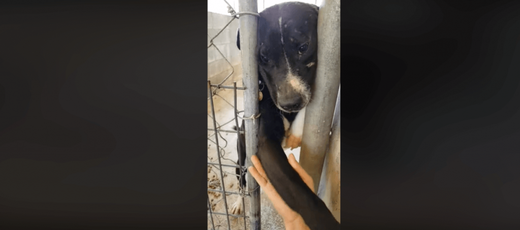 Hugging dog's hopeful adoption fell through and it wasn't his fault