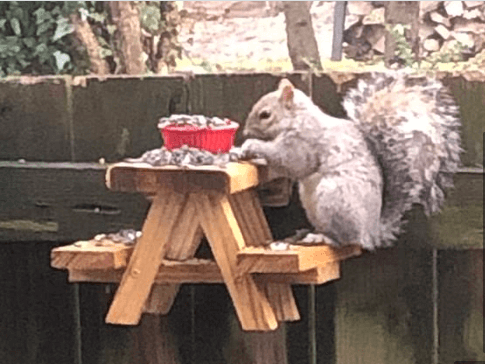 Man's tiny picnic table for squirrels charms the internet