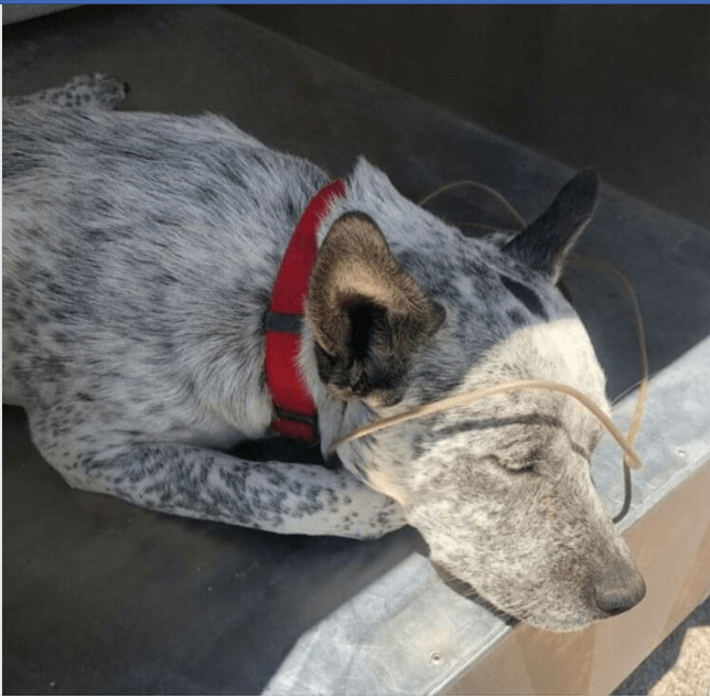 Trailer and all – family moved away dog left behind due to be euth'ed