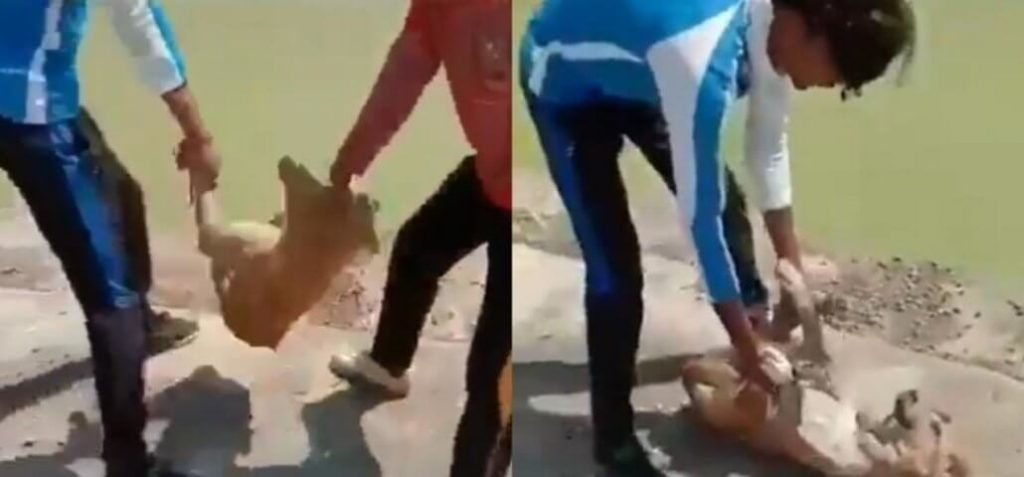 Viral TikTok video showing teens drown a dog in pond ends in arrest