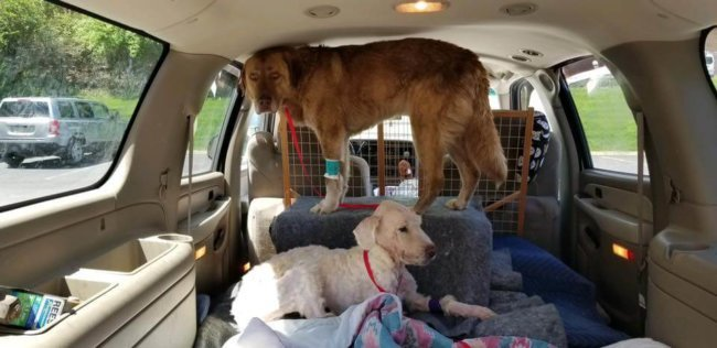 Update: Starving dogs with porcupine quills stuck in their snouts