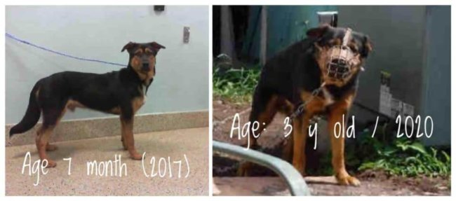 Urgent: Rottweiler rescue in Miami area needed