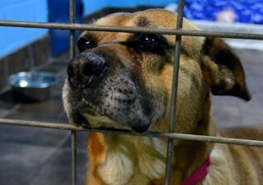 Rescued, abused dog teaches us resilience in times of crisis