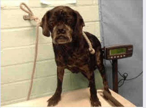 Senior dog surrendered – her family could no longer afford to keep her