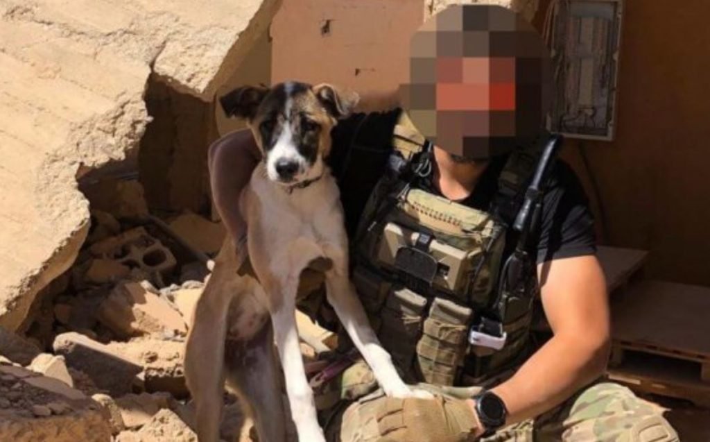 Soldiers partner with rescue org to bring stray dog home to U.S. from Syria
