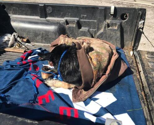 Broken and suffering – dog rescued from water filled ditch