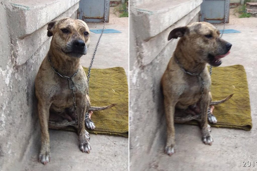 Outrage as two dogs auctioned off in Ukraine to pay owner's debts