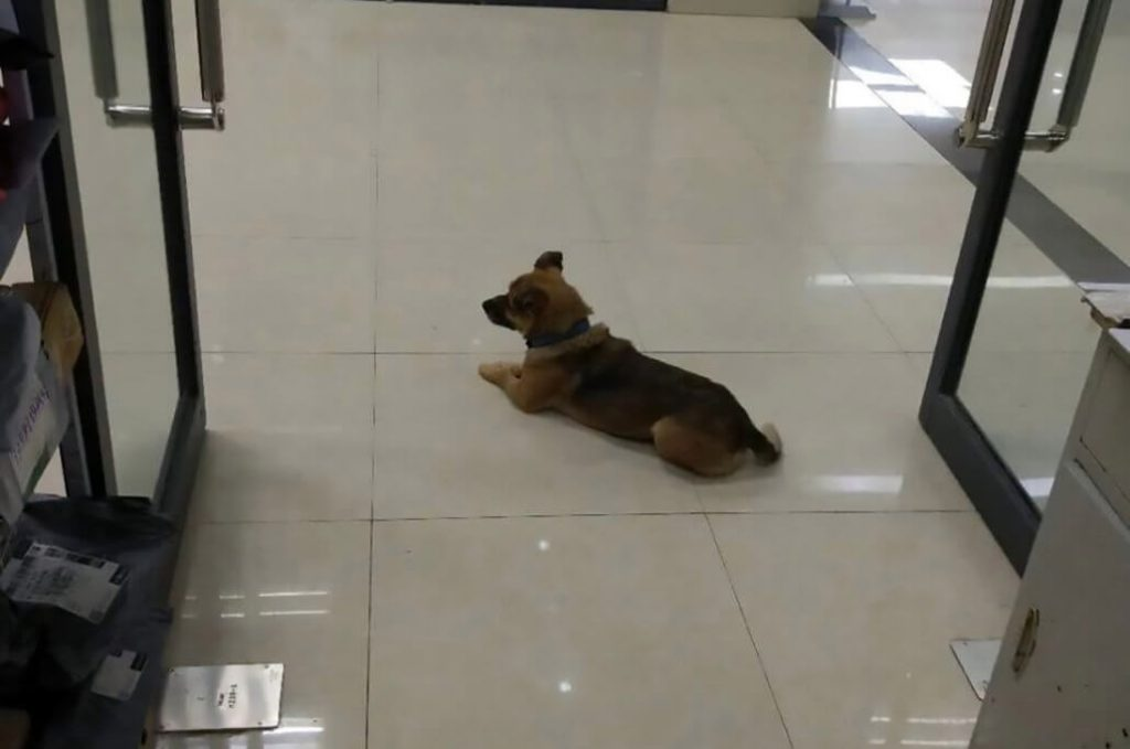 Dog waits at hospital three months after his owner died from Covid-19
