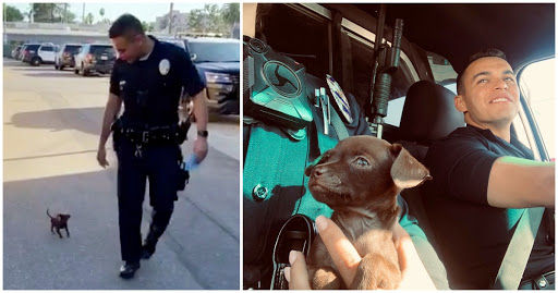 Pint-Sized Pup Joins Police Department After 2 Officers Saved Him While On Patrol