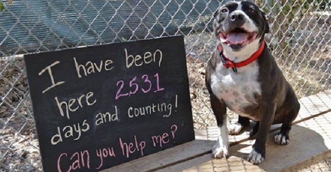 Lonely Dog Sits At A Shelter For 2.531 Days Waiting For One Human To Love Her