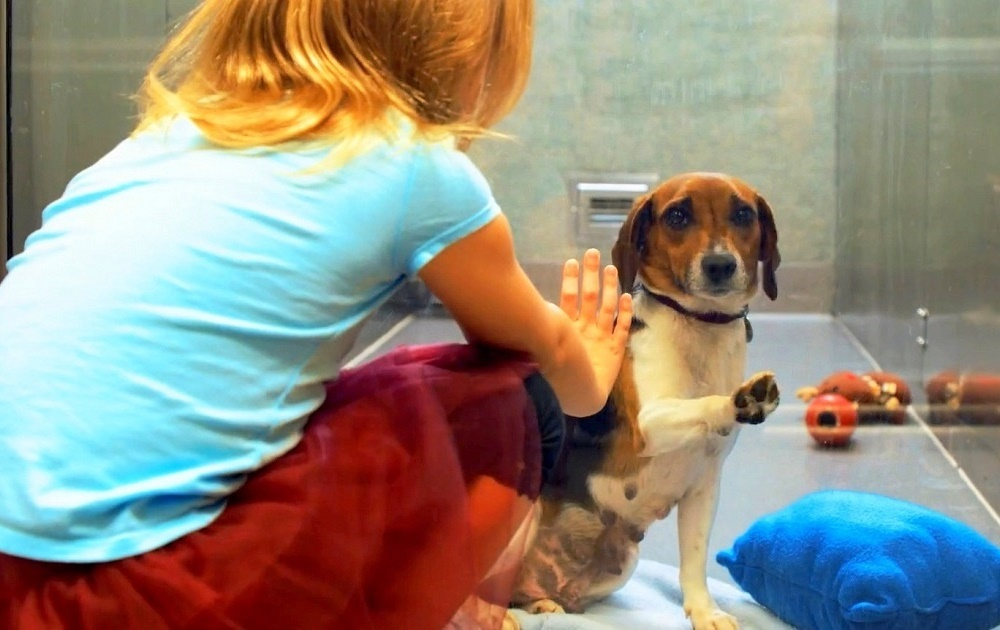 Sad Dog Watched Friends Get Adopted, Then A Little Girl Stopped At Her Window