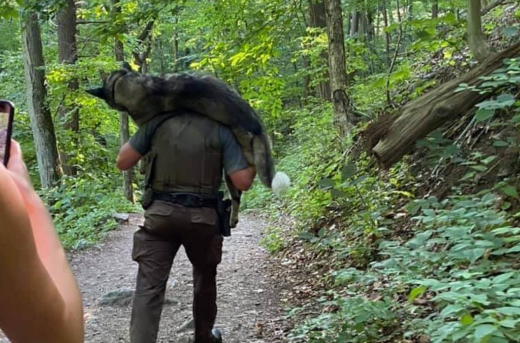 Ranger saves large dog on hiking trail who was struggling from the heat
