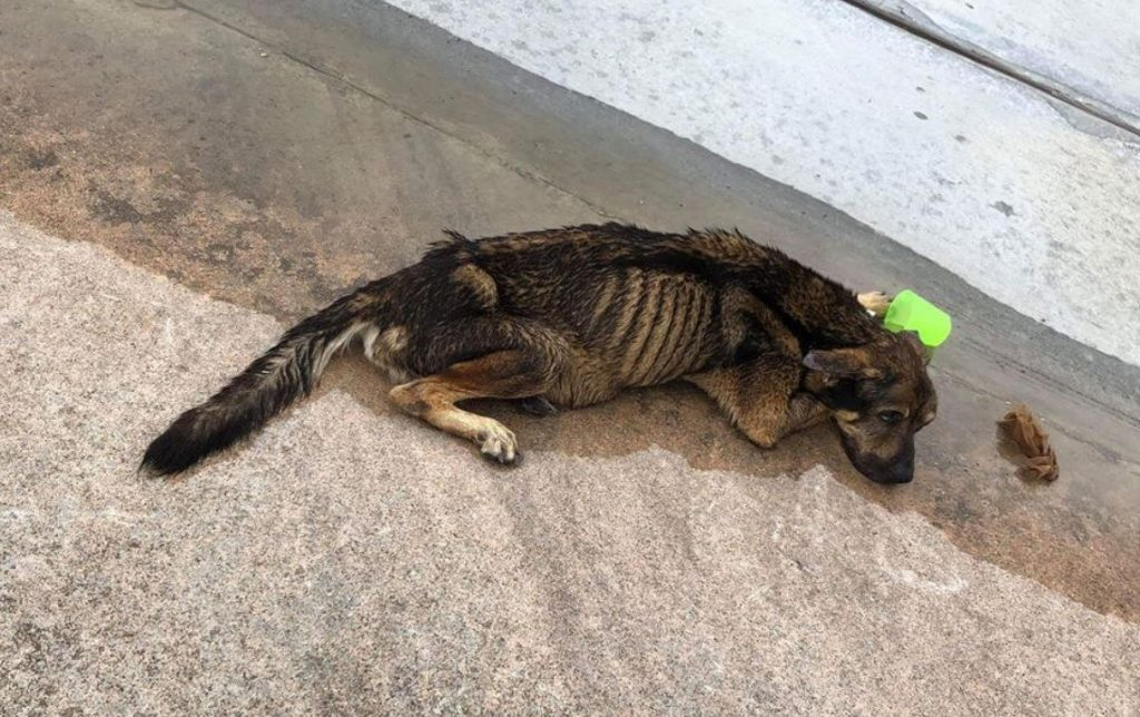 Houston dog laid in street dying,helpless and sick until someone cared