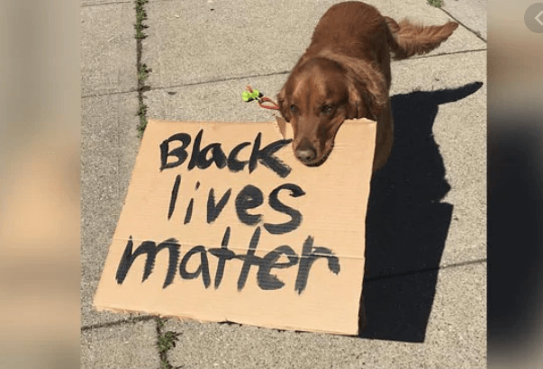 Video of dog holding placard 'Black lives matter' goes viral