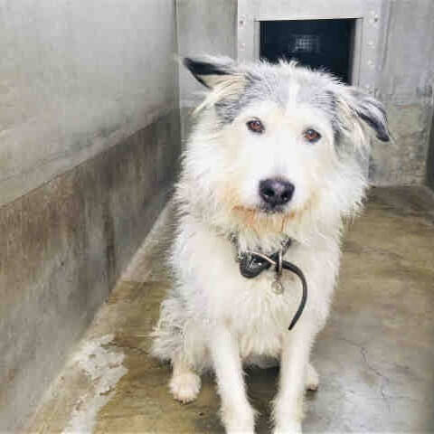 Shelter dog has movie star looks but still no home for Ryder