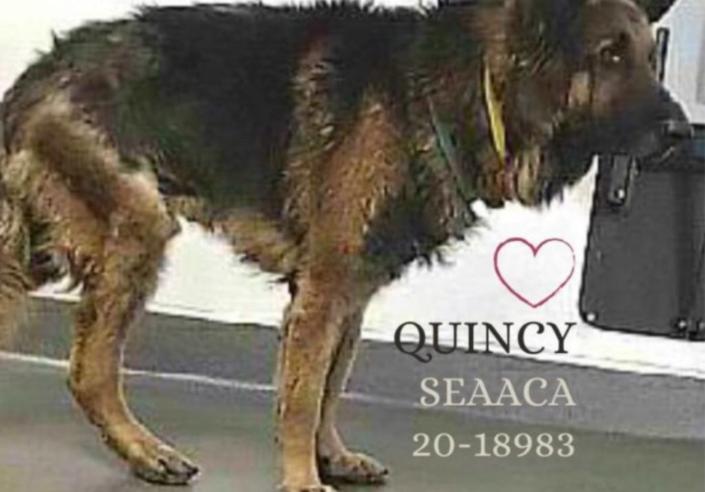 Senior dog's journey should not end alone and scared at crowded shelter