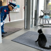 Social media revels as cat and museum security guard resume face-off
