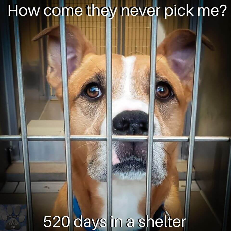 Pepsi, the shelter dog who nobody wants