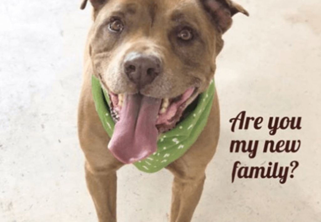 Senior dog – his family didn't have time for him, now he's the shelter's longest resident