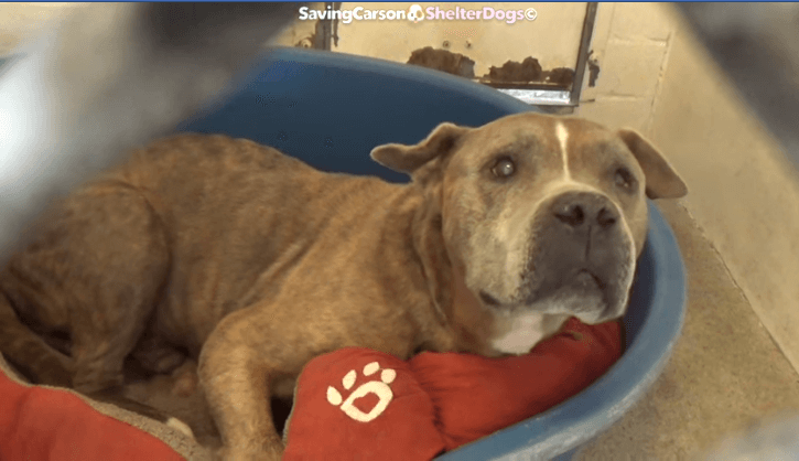 'Very affectionate, good boy' waits for someone to notice him at busy shelter
