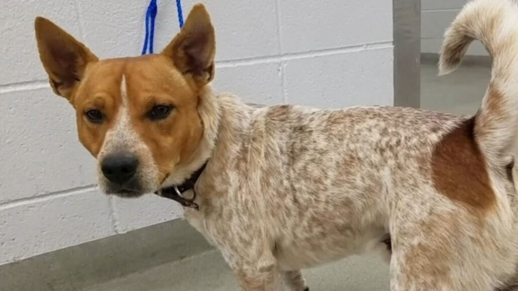 Houston man who choked and beat dog sentenced to prison