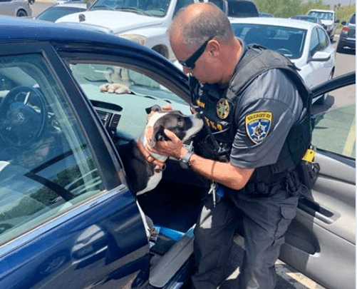 Officer finds puppy trapped inside of parked vehicle on hot day