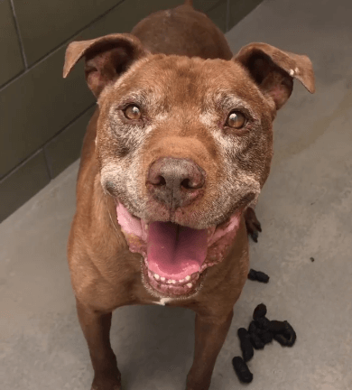 After weeks of being overlooked, senior dog is becoming sad and stressed
