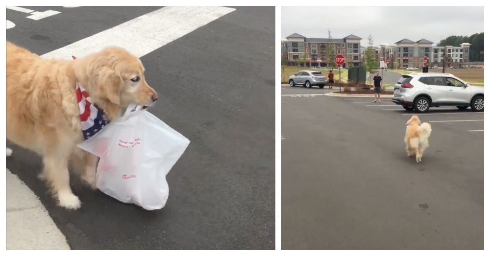 Dog Loves To Fetch Curbside Pickup For Owners