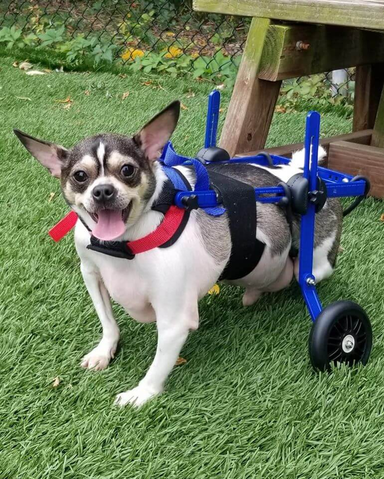 Home needed for disabled dog who was abandoned in a box