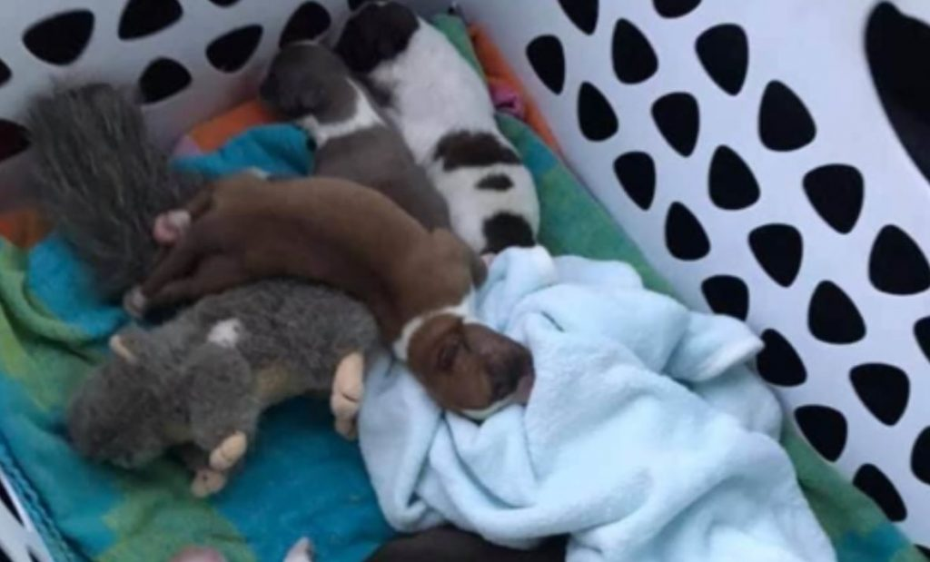 Six newborn puppies about to be left at shelter door rescued