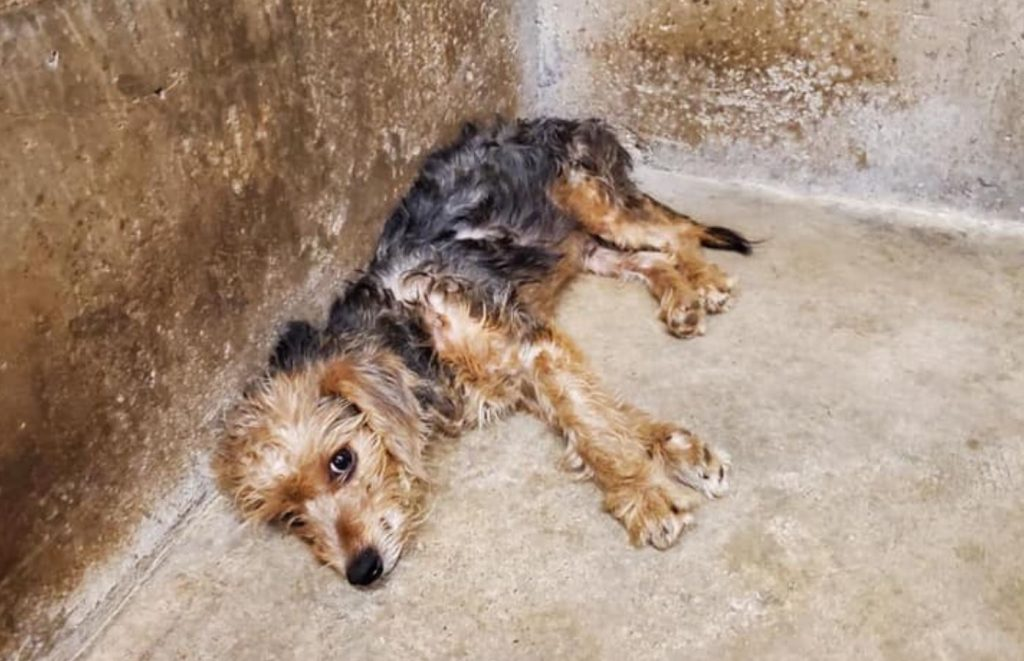 Scared dog waits to be saved at animal control agency