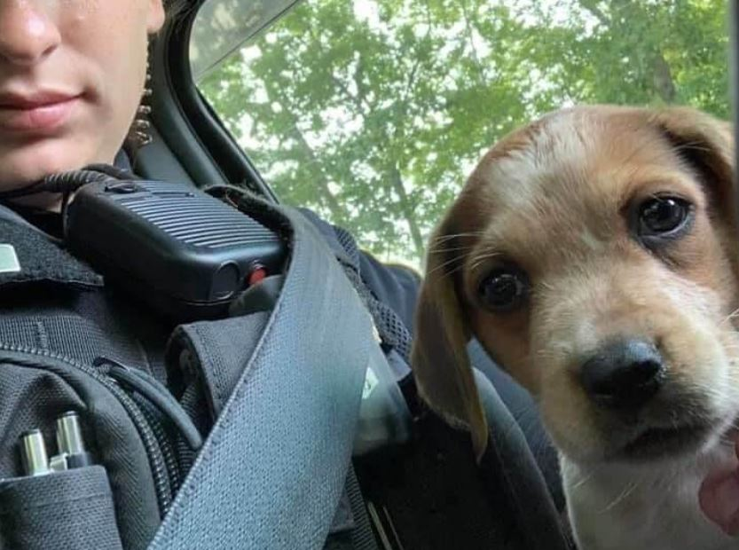 Abandoned puppy gets forever home with police officer who saved her