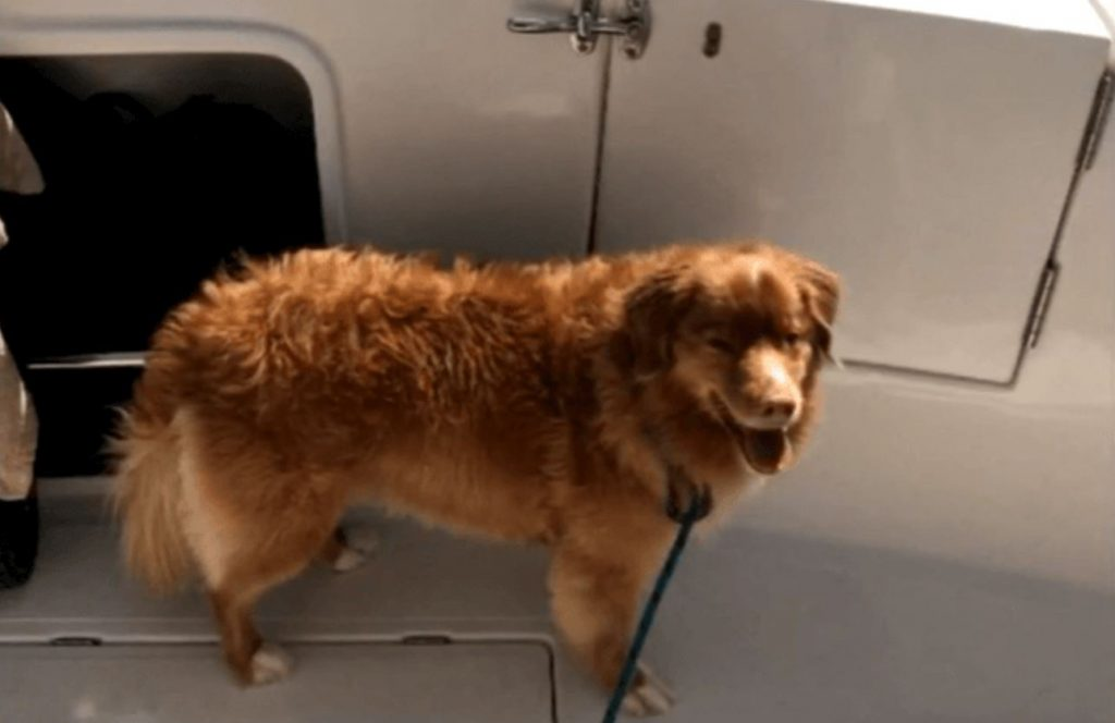 Dog found swimming four miles from shore on Lake Michigan