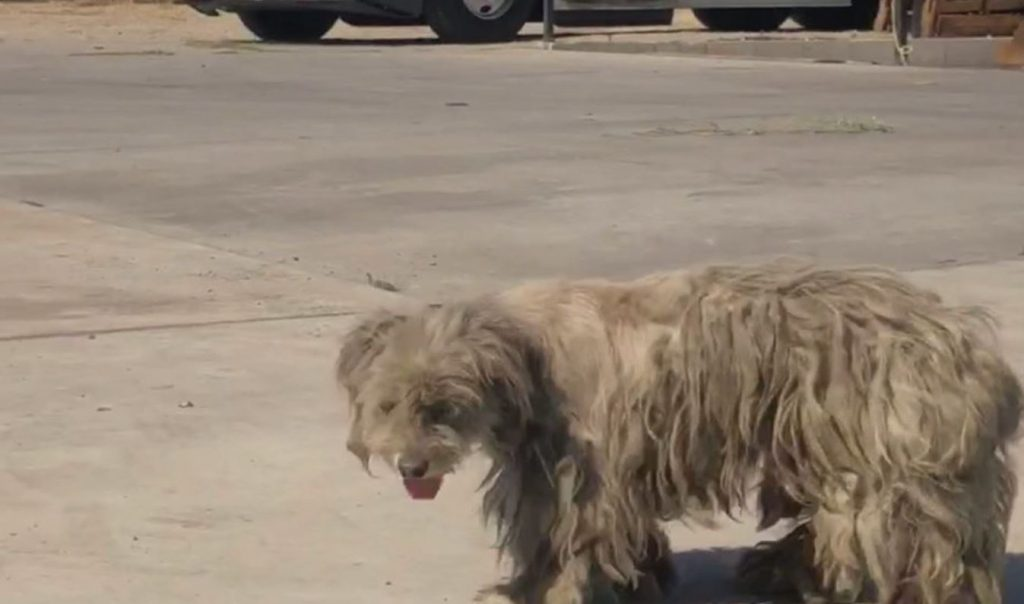 Suffering pup hid under trailers for more than a year until someone cared