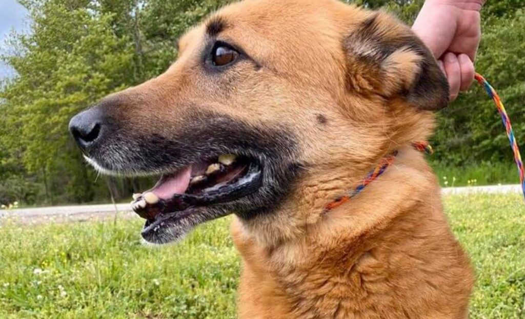 Abused dog adopted from shelter, but her new family gave her just 3 hrs before returning her