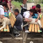 6 People Rescue Retired Police Dog From Park Bench