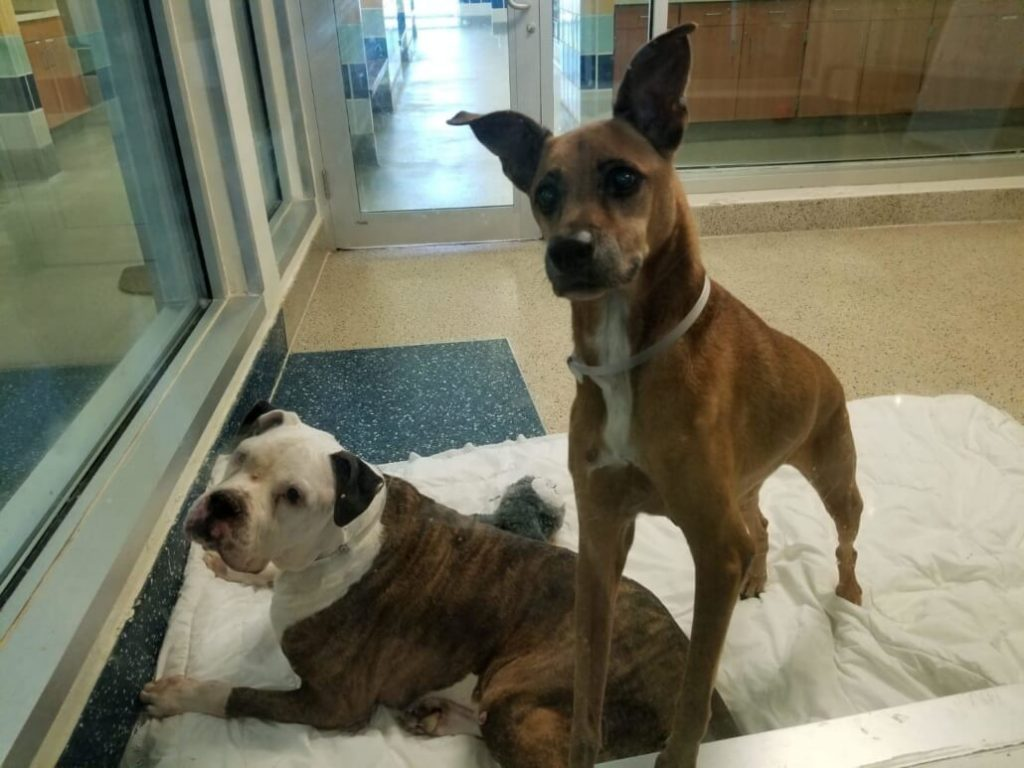 Miami shelter reunites longtime companions but no one wants them