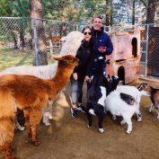 Governor's mandate closes tourist farm, putting 96 rescued animals at risk
