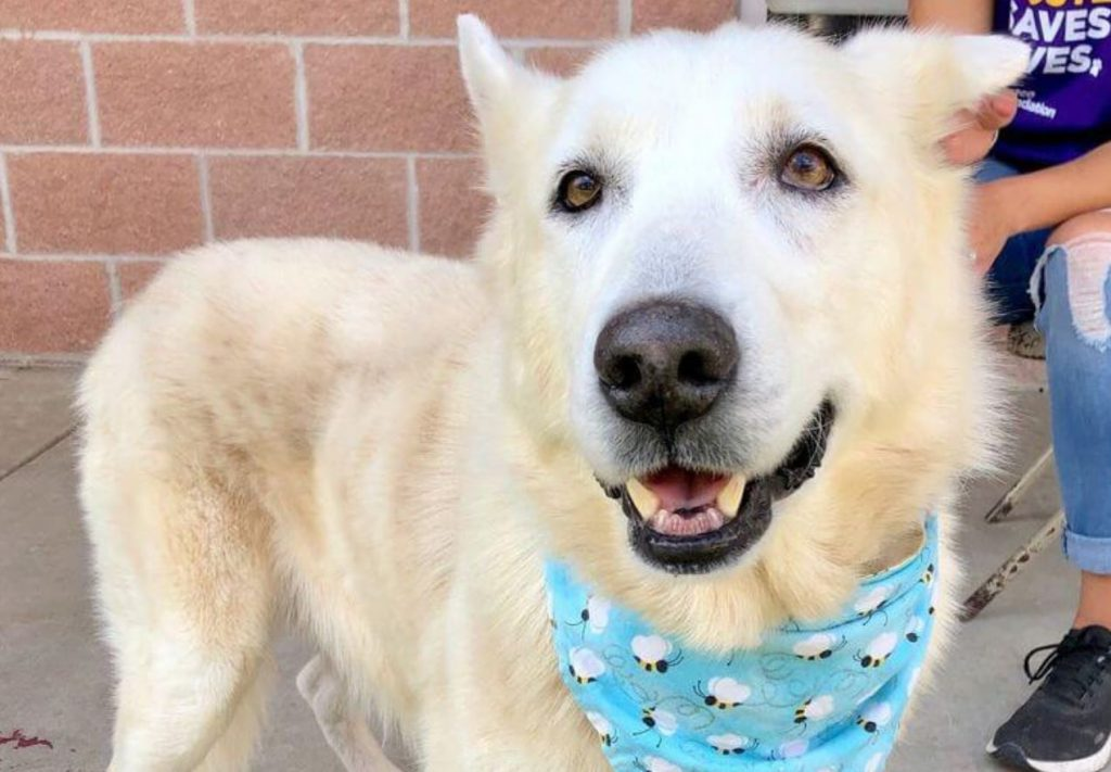 'Sweet boy' at high risk of being put down at busy Texas animal control facility