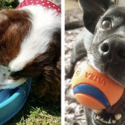 14 People Reveal The Best/Most Useful Dog Products They Ever Purchased