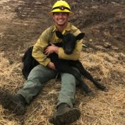 Calf rescued from burning blackberry bushes