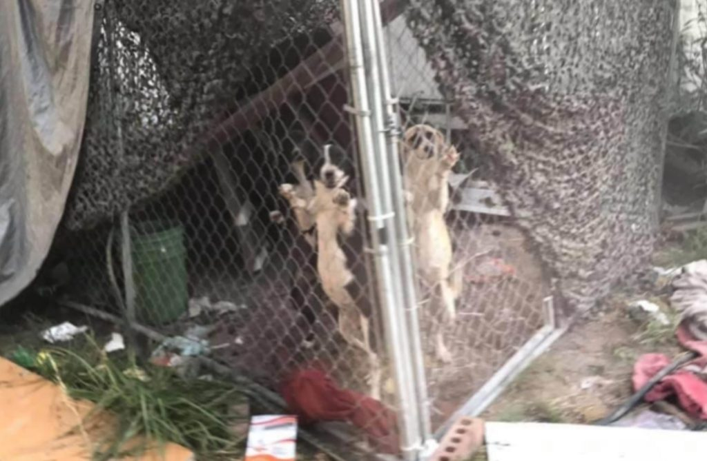 Puppies locked in kennel abandoned in filthy Dallas drug house
