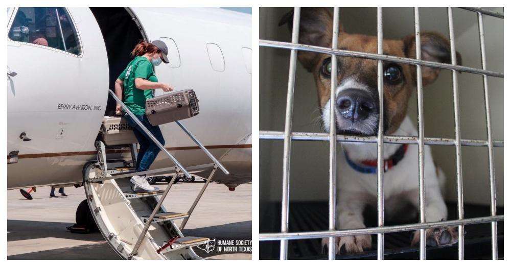 Over 400 Shelter Pets, Including 3-Legged Mouse, Flown To Safety Ahead of Hurricane Laura