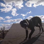 Rescuers Called About A Stray Dog That Was Stuck On The Roof