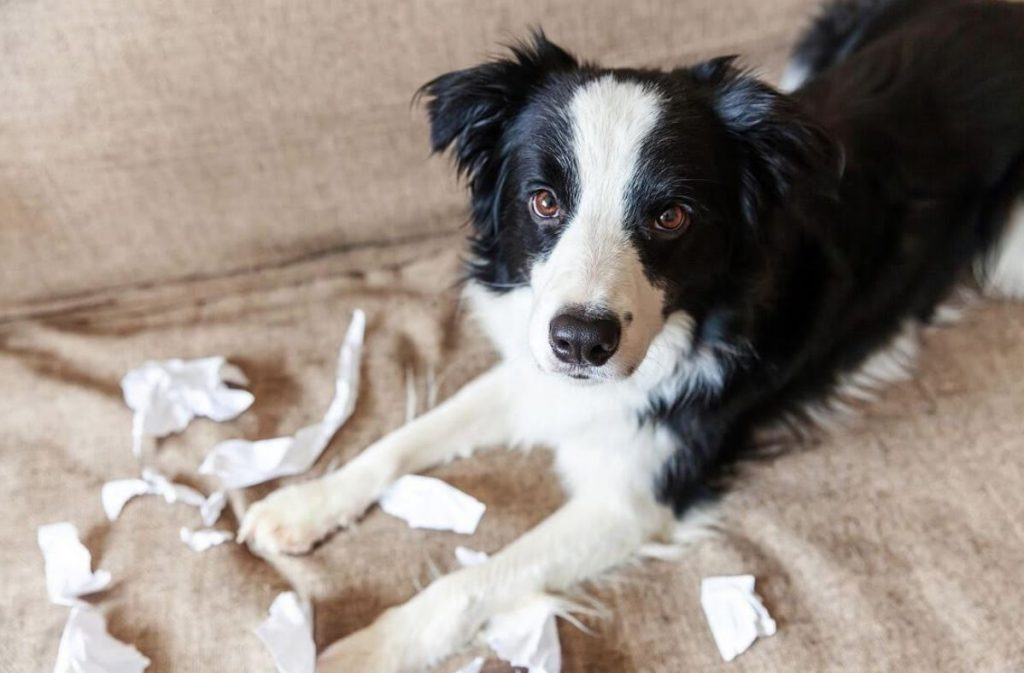 Why Is It Bad To Punish Your Dog?