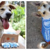 Charity Rescue Dog Has Cutest Response When His Humans Win Nobel Peace Prize