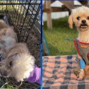 Reward offered after dying dog found inside of porta-potty